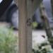 woody-woody_fietsenhok_van_tuinhout_&_opticolor_golfplaat_06