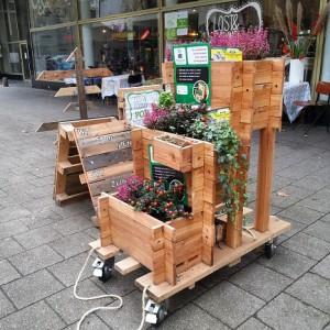 woody-woody_Plant-an! Coolsingel